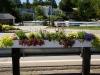 public-space-flowers