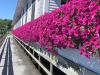 hotel-flower-boxes